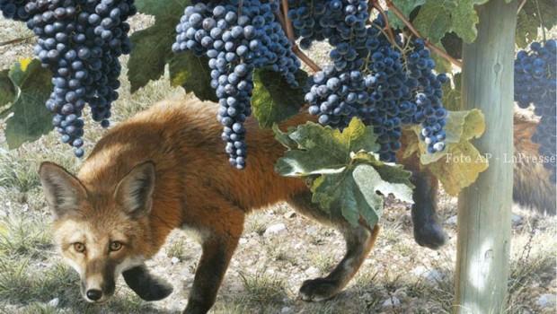 Risultati immagini per volpe e uva