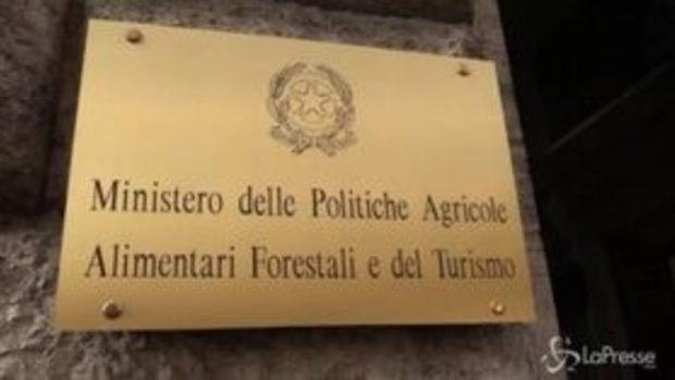 Pastori sardi, al tavolo di Roma non si presentano gli industriali